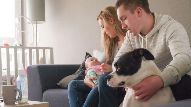 Bonne nouvelle la famille s agrandira bient t vous tes bien entendu aux anges mais comment - Image bebe chien ...