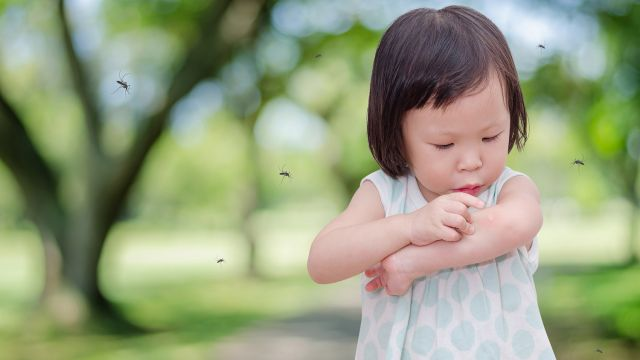 Soulager les piqûres d'insectes - Vacances - Printemps et été - On ...