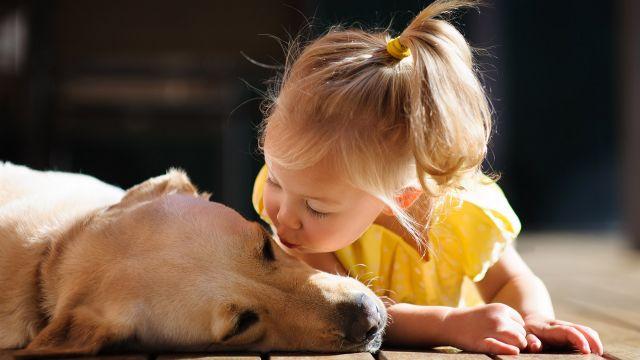 https://www.mamanpourlavie.com/uploads/images/articles.cache/2016/06/10/file_main_image_13161_1_relation_chiens_enfants_01_13161_1500X1000__cache_640x360.jpg